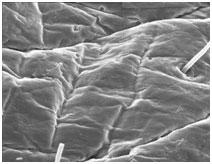 オバジ・クレンジダームMDの可溶性BPO